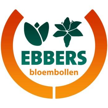 Bloembollen van Ebbers